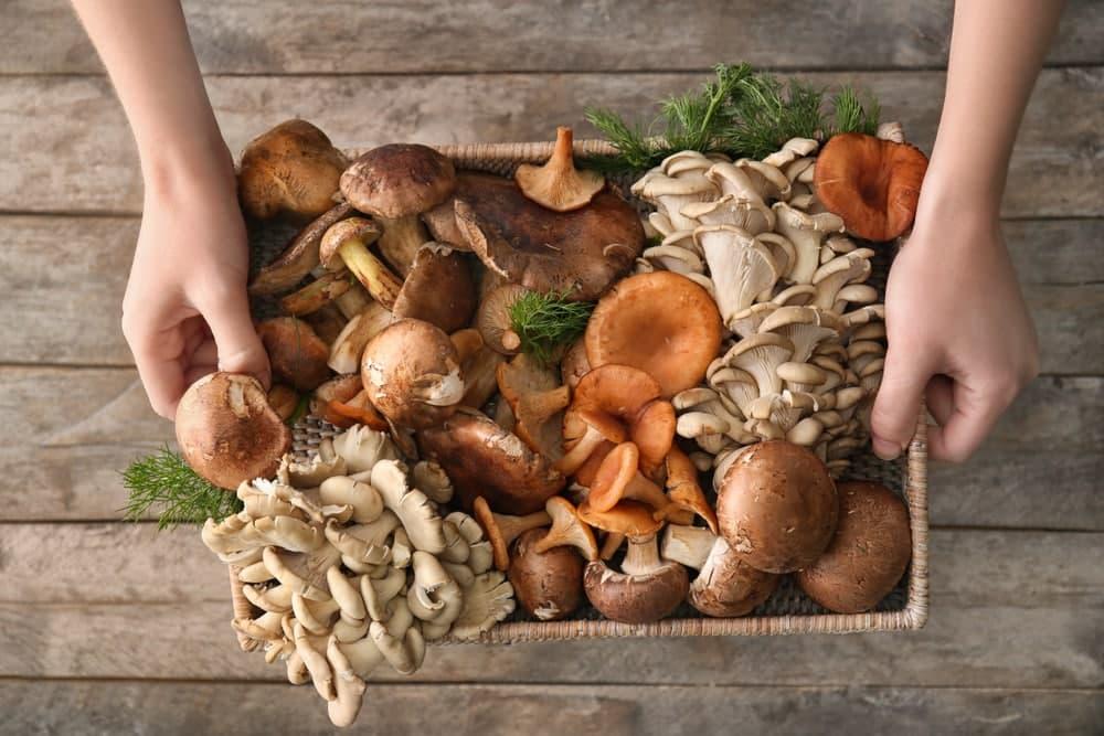 فواید رژیم غذایی قارچ