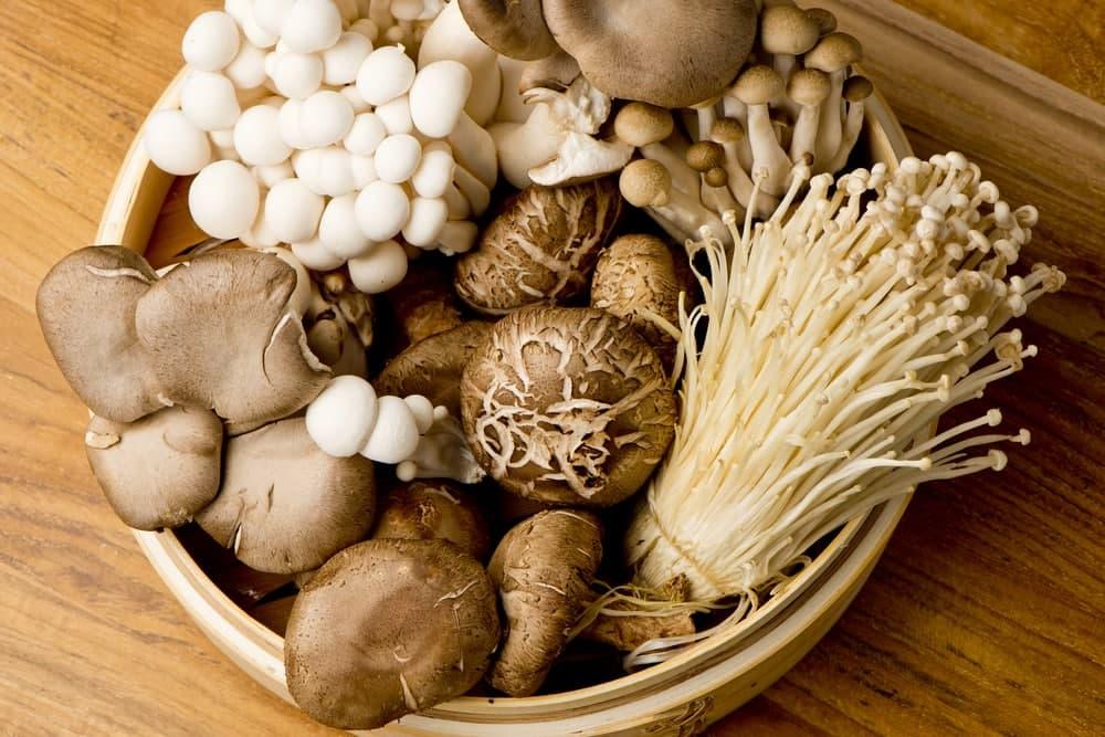از چه قارچی برای رژیم غذایی قارچ باید استفاده کرد